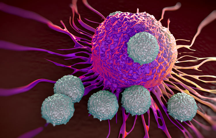T-cells attacking cancer cell; illustration of microscopic photos