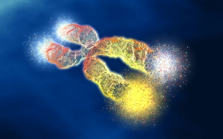 telomere DNA illustration