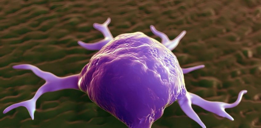 3d rendering - macrophages